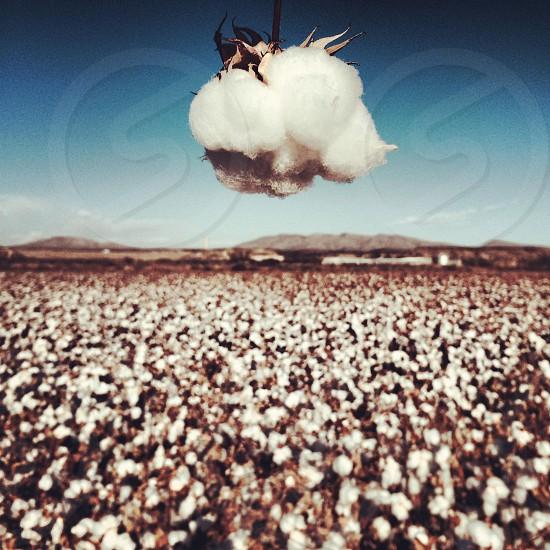 white flower field photo