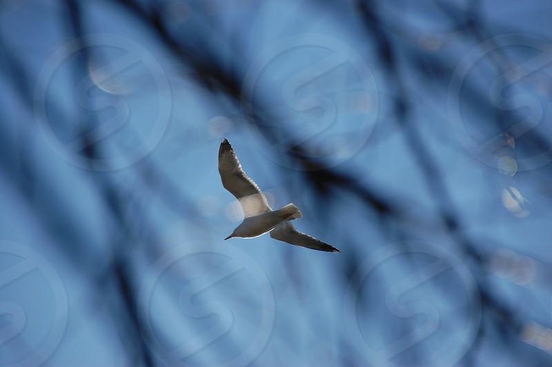 sea gull tree branches photo
