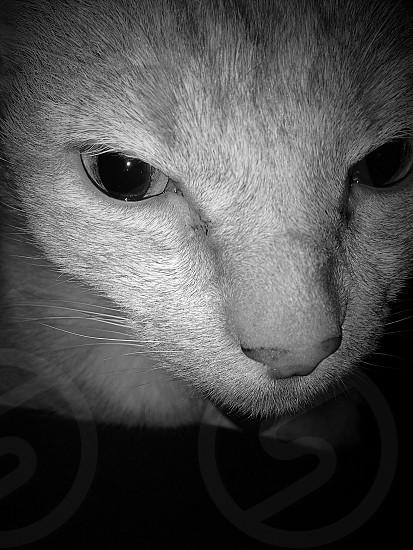 Cat eyes photo
