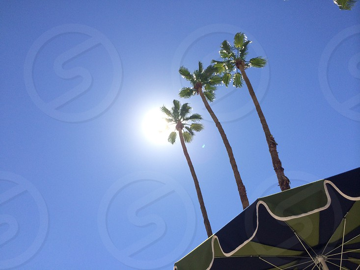 three coconut trees under blue sky during daytime photo