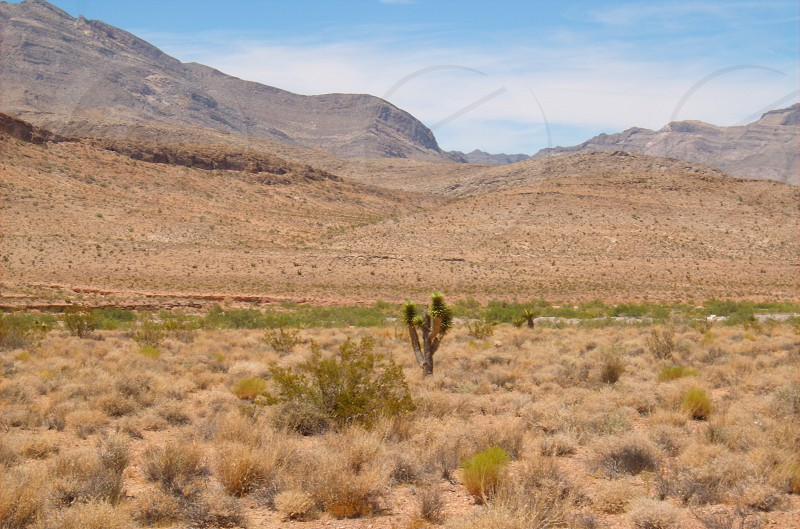 Desert cactus and mountains photo