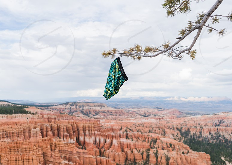 blue green and yellow boxer shorts hanging on branch of tree on top of cliff photo
