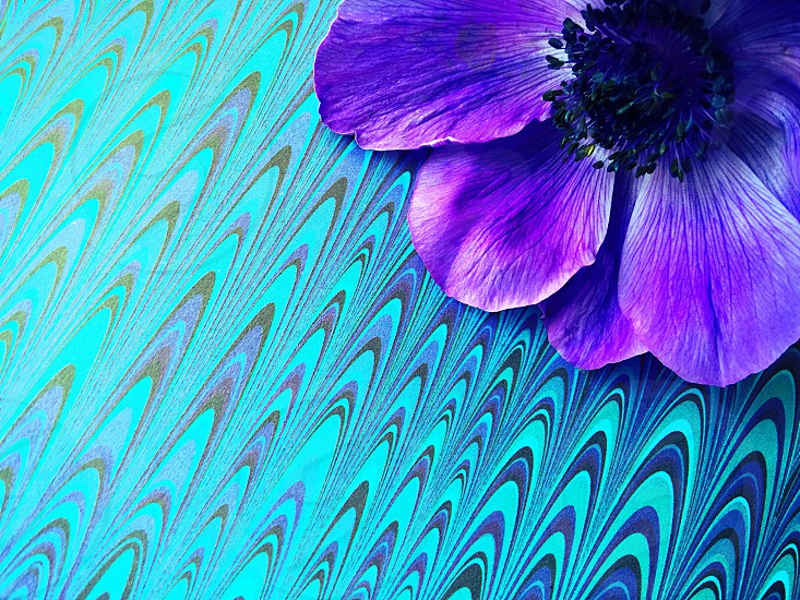 Purple anemone on patterned background photo