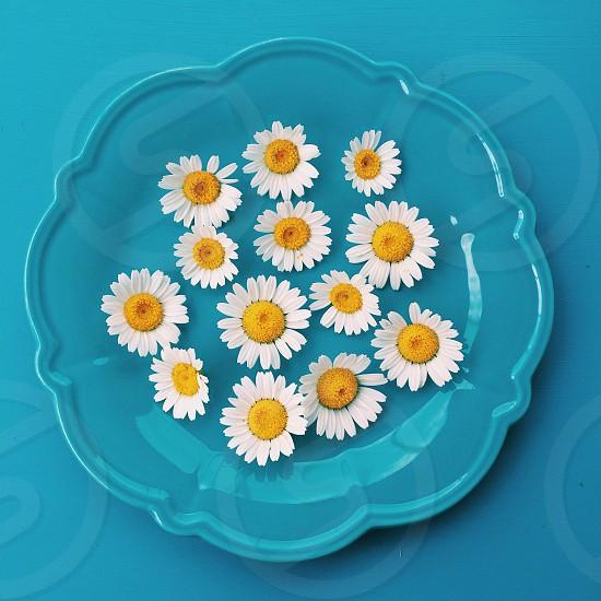 white daisy printed blue ceramic plate photo