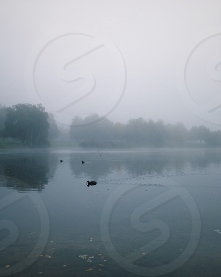 Foggy river photo