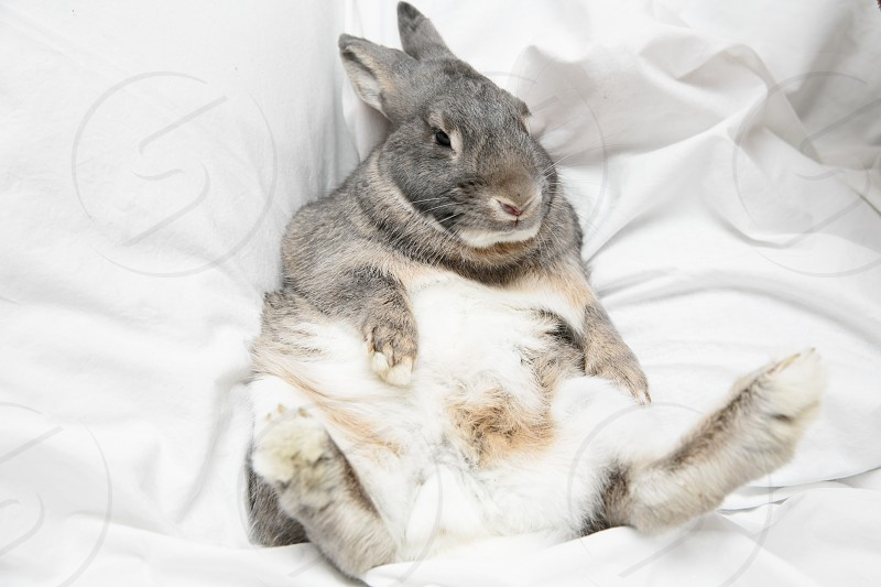bunny rabbit hare pet cute pet chill vibes cute photo