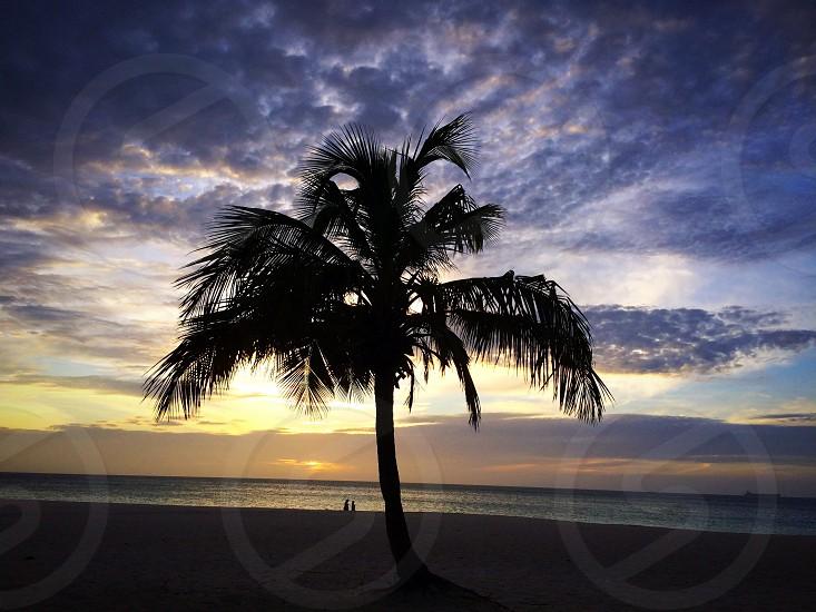 Sunset beach aruba palm tree  photo