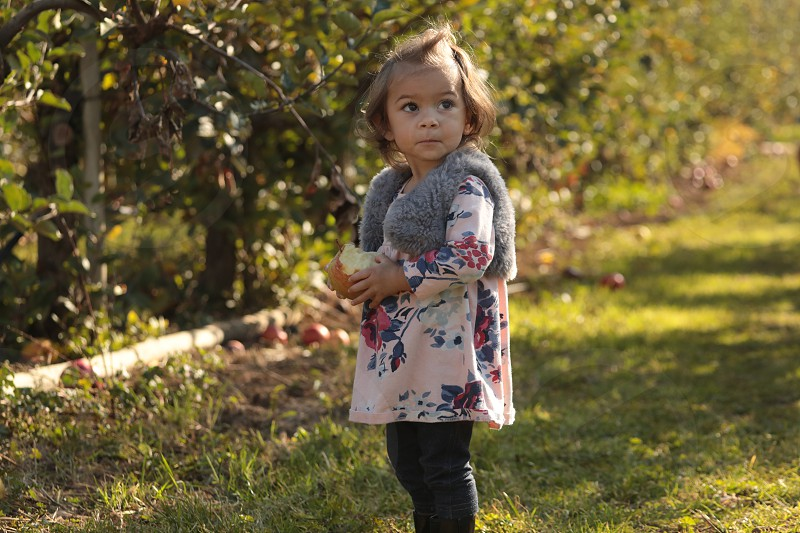 Toddler girl eating apple in orchard. photo