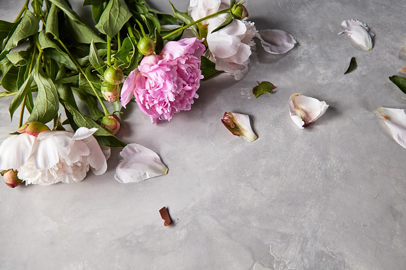 Fresh bouquet of white and pink peonies and flower petals on a gray concrete background with copy space. Valentine's day card. Flat lay photo