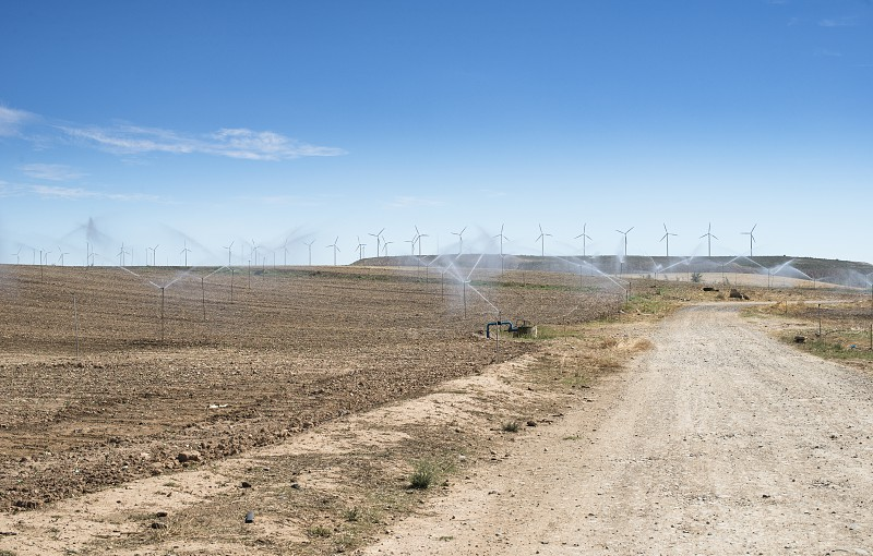 Irrigation sprayers in the field. Yellow plants photo