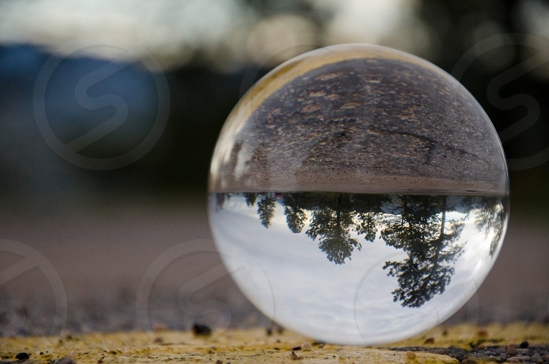 water droplet reflecting trees photo