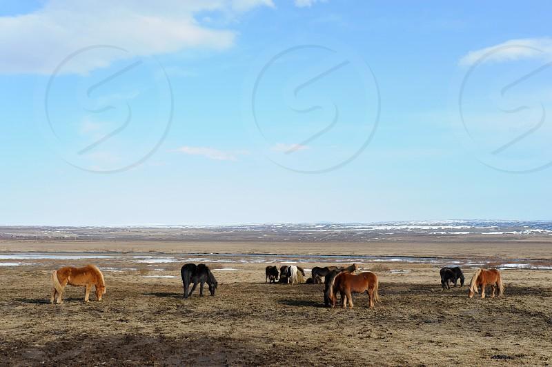 horses standing photo