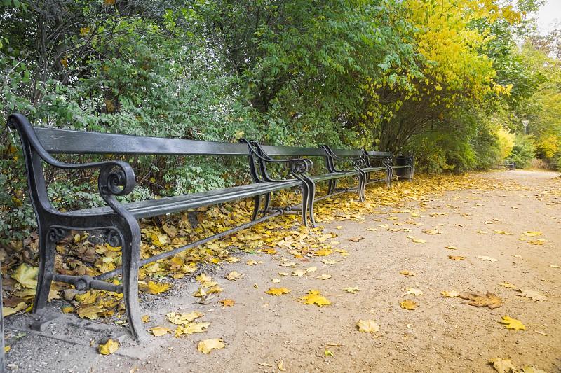 Autumn loneliness photo