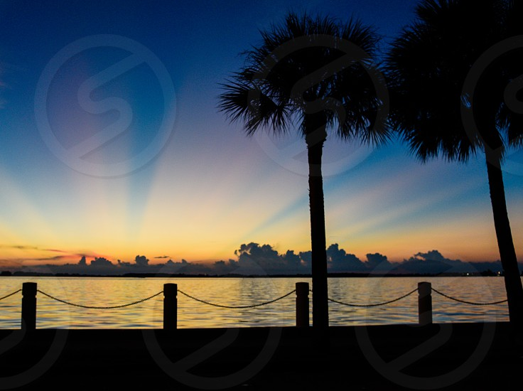 silhouettes of tall palm trees and rope railings near calm large body of water under blue sky at sunset photo