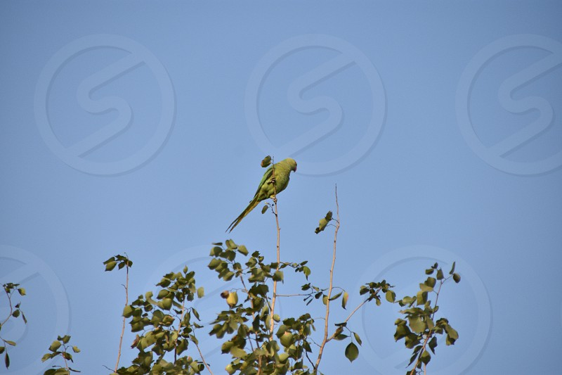 Parrot @BPS Mumbai photo