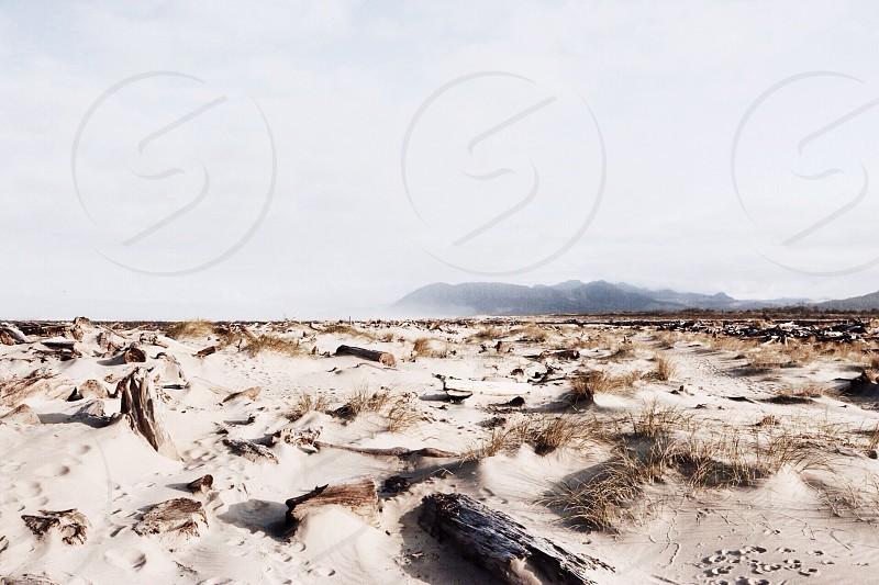 grey sand with grey tree branch photo photo
