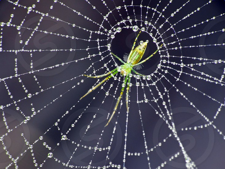 Spider web trapping insects photo