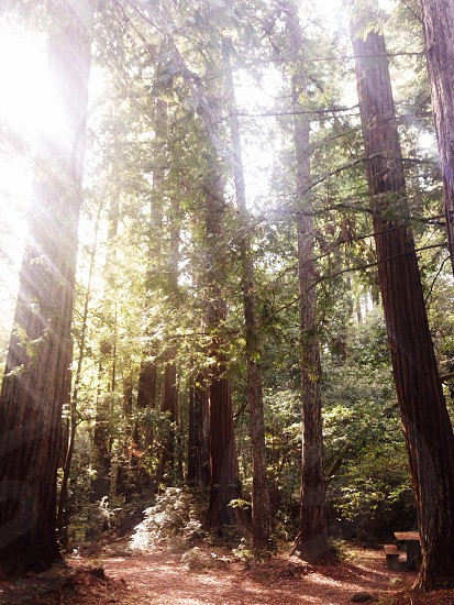Rays of sunshine filtering through the trees photo