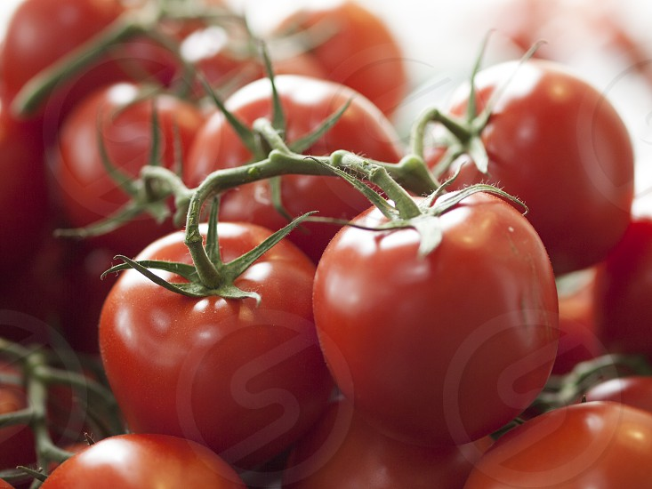 High Key Tomato Stem Vines Green Fresh Red Juicy Vegetables photo