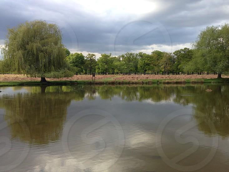 Richmond Park UK photo