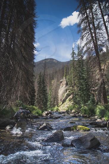riverbank alongside pine trees photo
