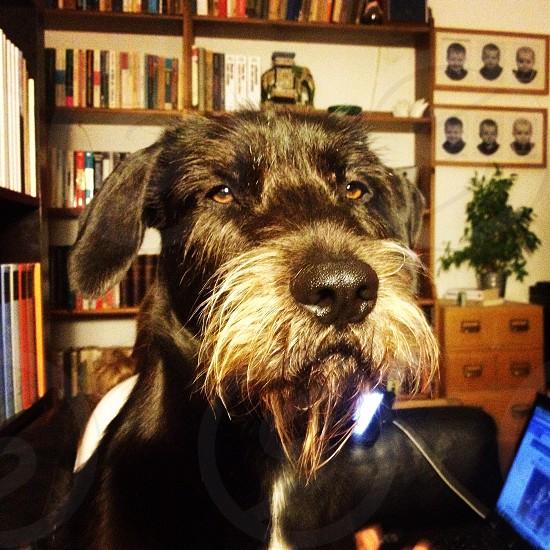 Dog beard photo