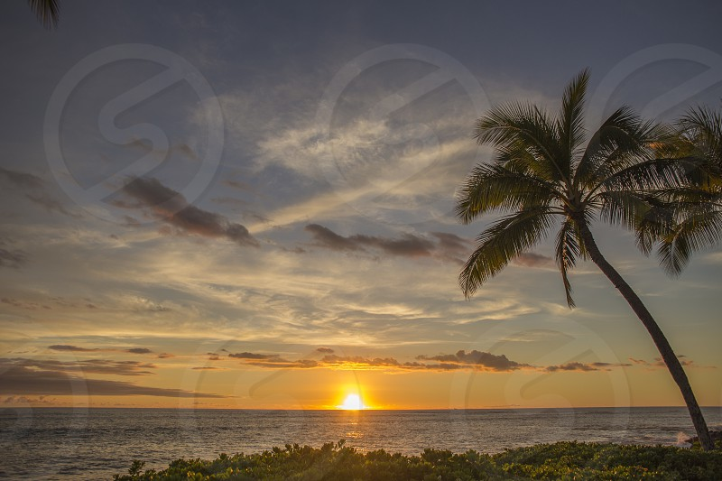 silhouette of palm tree beside sea during golden hour photo