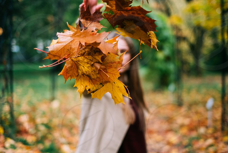 girl throws beautiful autumn leaves  photo
