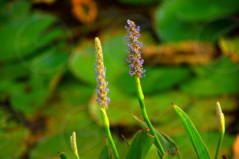 green plant macro photography photo