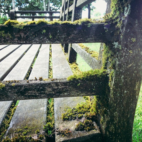 Mossy bench in a park.  photo