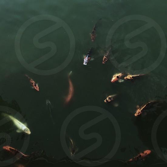 Fish pond nature photo