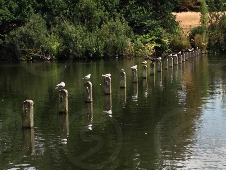 Birds in line photo