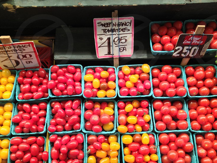 red and yellow tomatoes photo