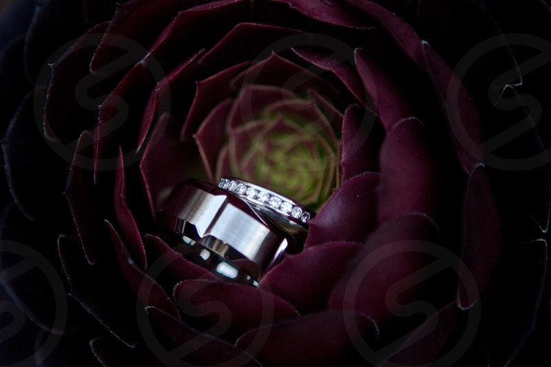 silver ring and diamond silver ring in the middle of burgundy layered petaled flower photo