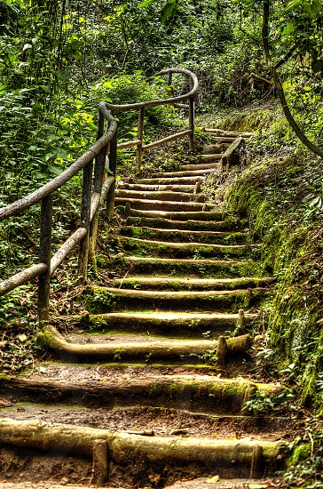Stairs to the forest... photo