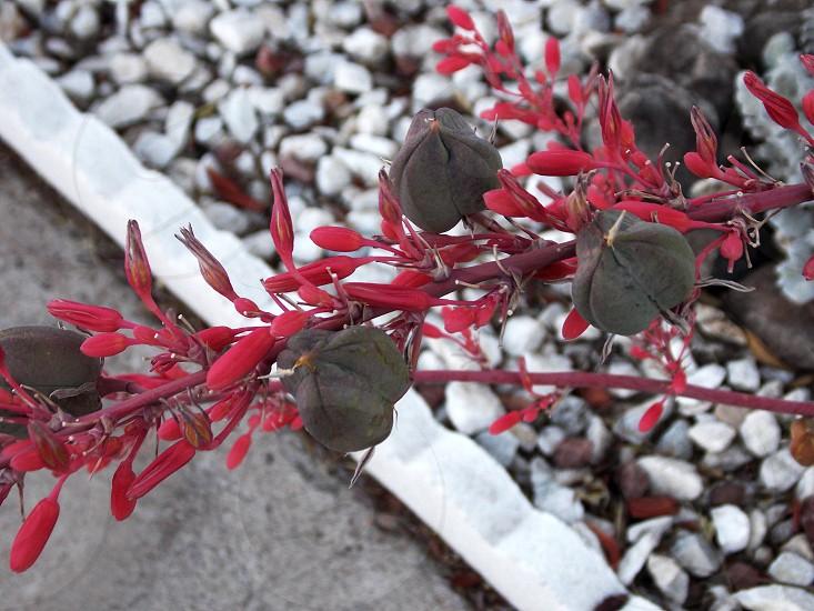 White gray gravel red flower  photo
