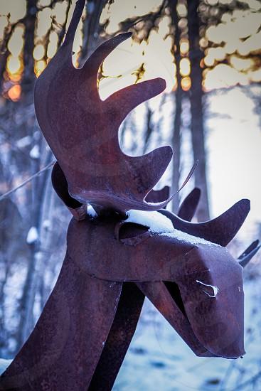 Frozen Moose photo