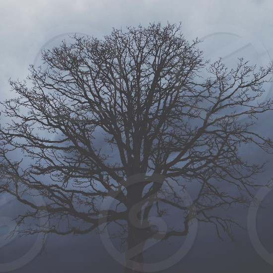 view of leafless tree photo