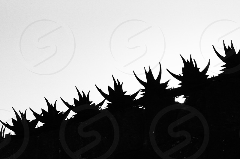 Abstract harsh defense shape  Black and white high contrast photo
