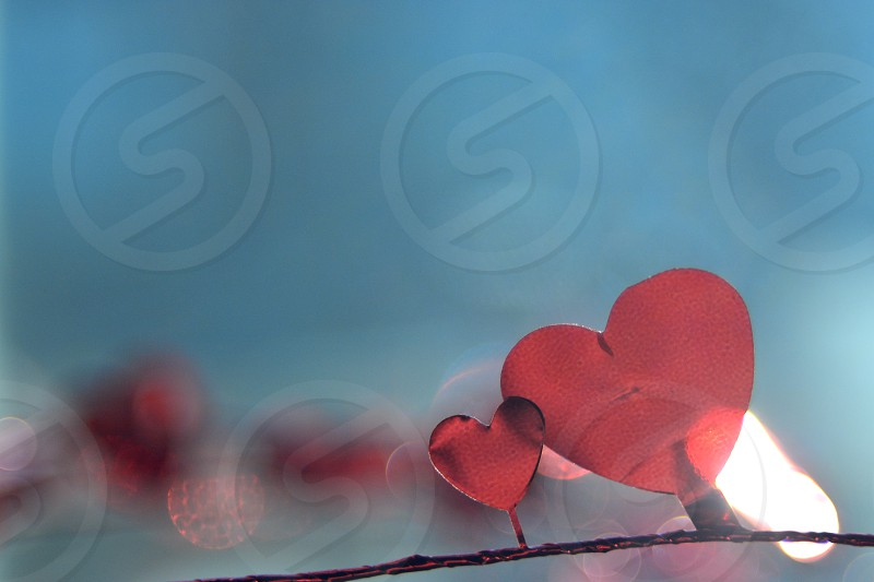 Hearts Valentine s Day photo