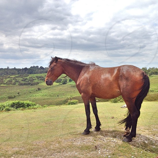 brown horse on green hill photo