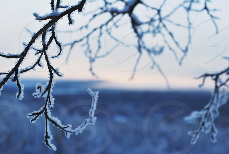 frost covered tree branches photo