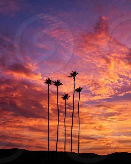 silhouette of 5 palm trees under orange sunset photo