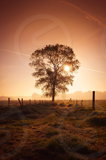 Stunning sunlight through a solo tree photo
