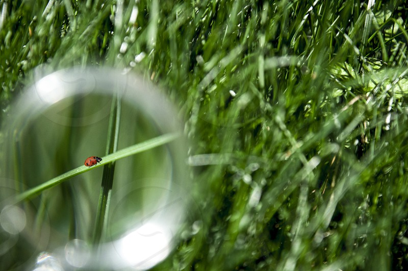 Ladybug on grass behind a magnifying glass photo
