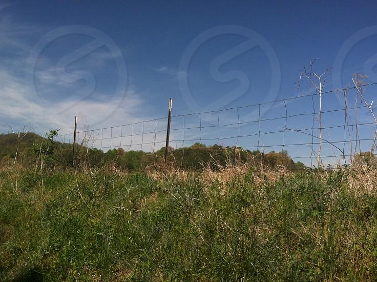 green stalks near the fence photo
