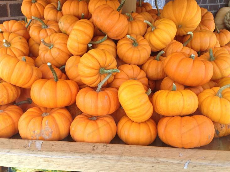 Mini pumpkins  photo