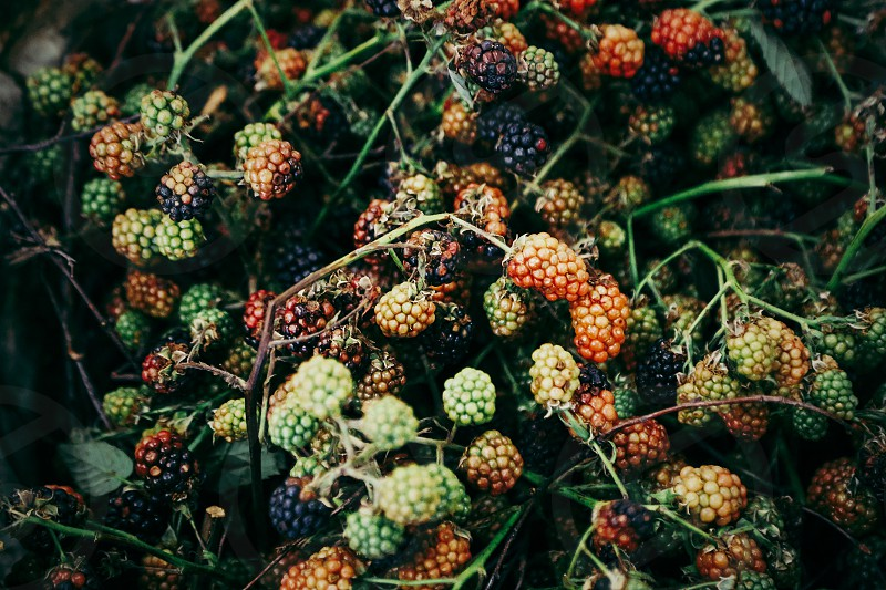 The art of color palette  berries autumn fall  outdoors nature photo