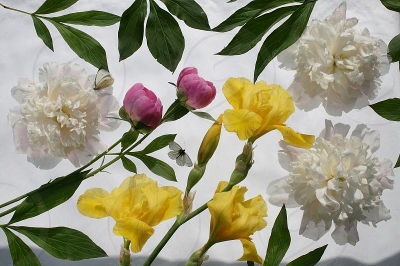 Bright flowers photo