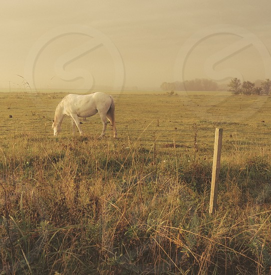 horse white sunrise the country grass photo